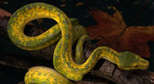 The Serpent Was More Cunning - Quick & Powerful - Bible Study